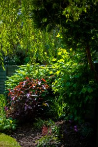 Ashton open Gardens (20 of 46)
