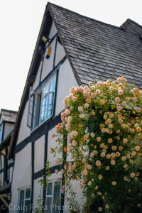 Roses Round the House - Orchard House